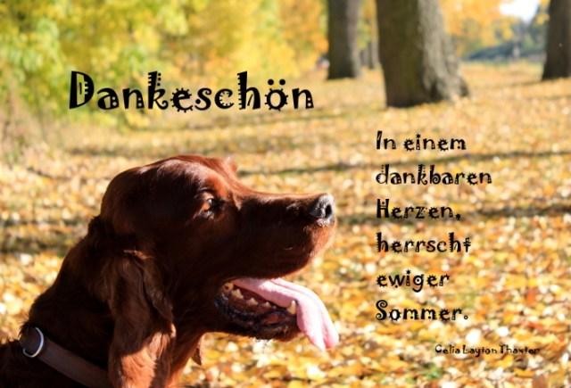 Spruchbild mit Hund
