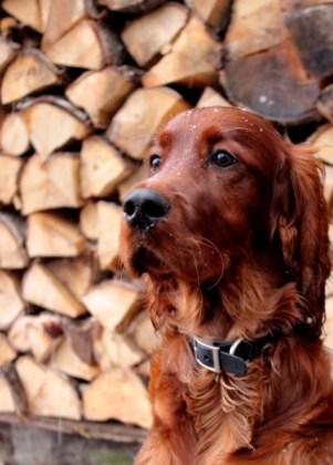 Spruchbild mit Hund selber machen mit Bildbearbeitung am Beispiel eines Hundes