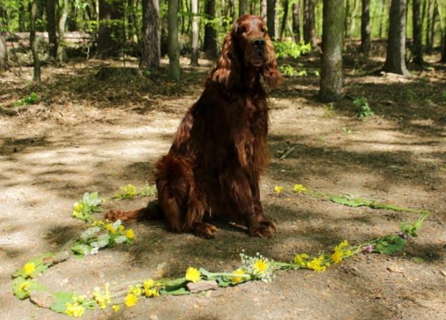 Hund sitzt in einem Herz aus Blumen