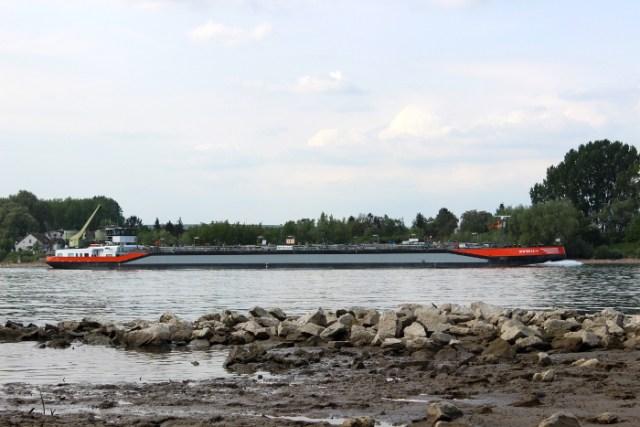 Frachtschiff vom Rheinufer aus gesehen