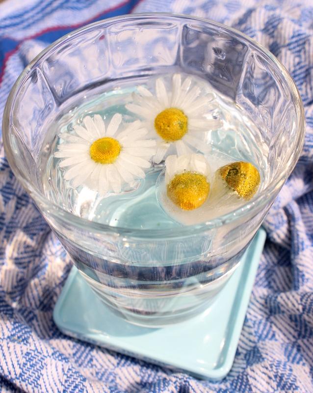 Kamillenblüten Sommerdrink Sommertee Eistee selbermachen