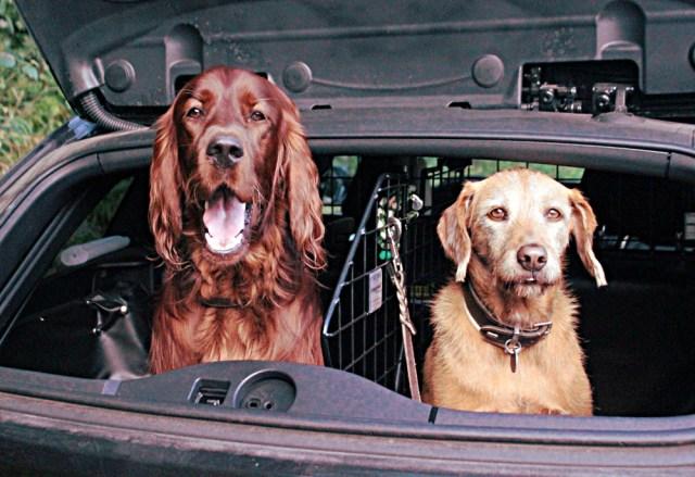 Krimitour für Hunde Krimispiel mit Hund