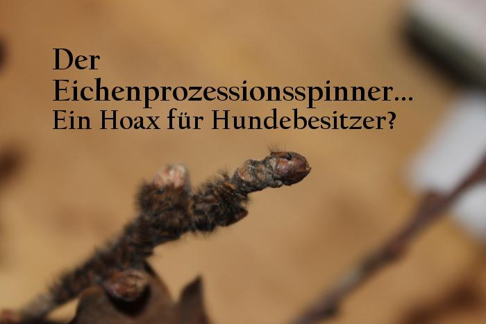 Der Eichenprozessionsspinner - ist die Raupe gefährlich für den Hund?