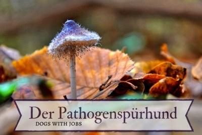 Pathogenspürhund