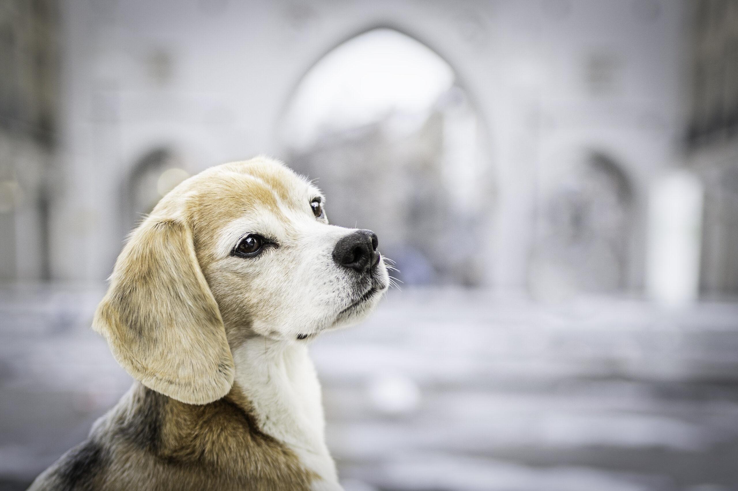 City München Hundeshooting Hundefotos