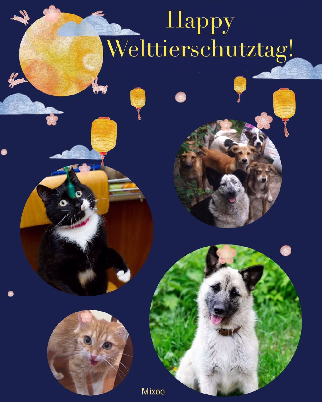 04. Oktober 2017: Welttierschutztag