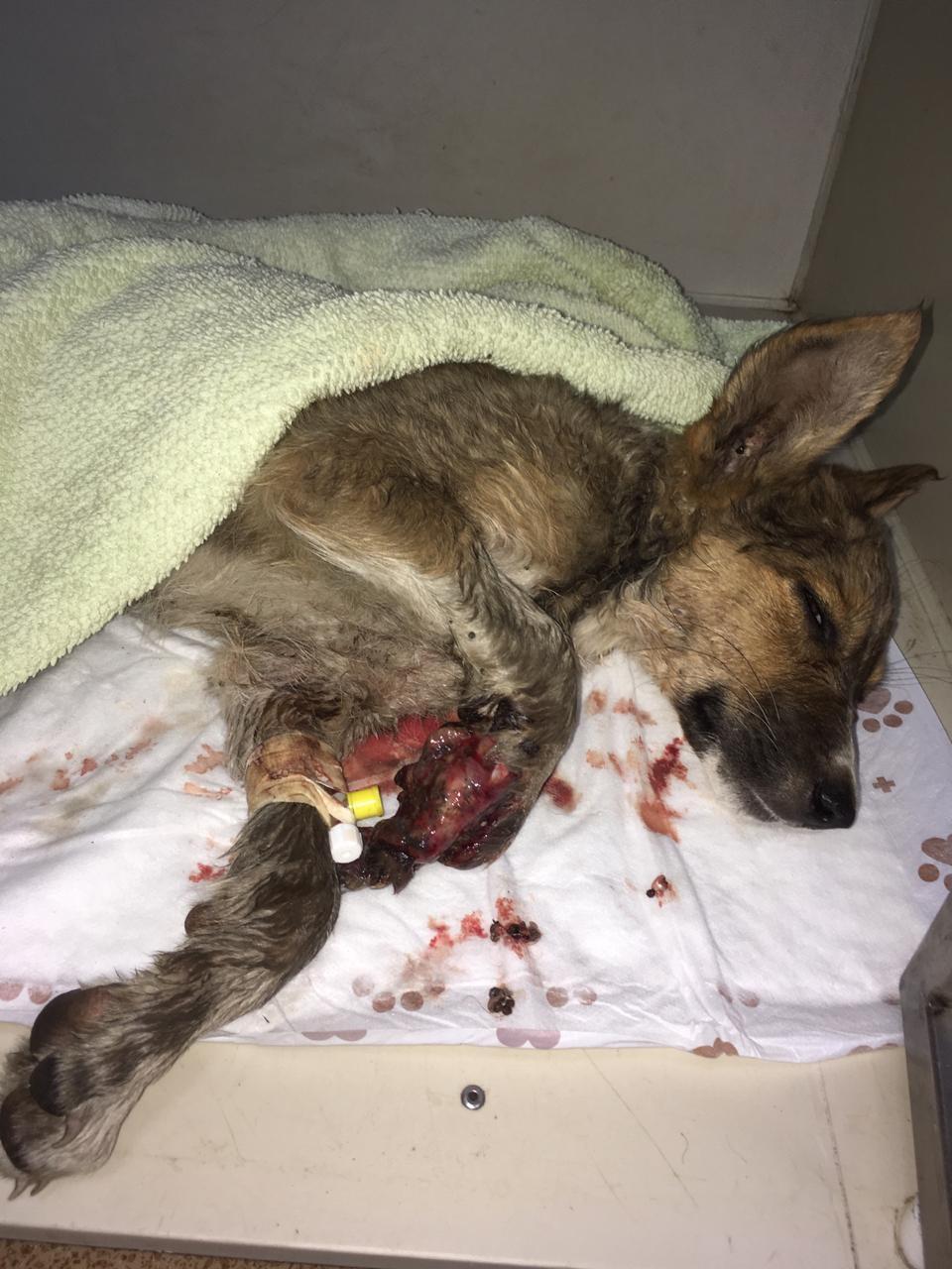 In Valentinas Tierheim häufen sich die Notfälle.