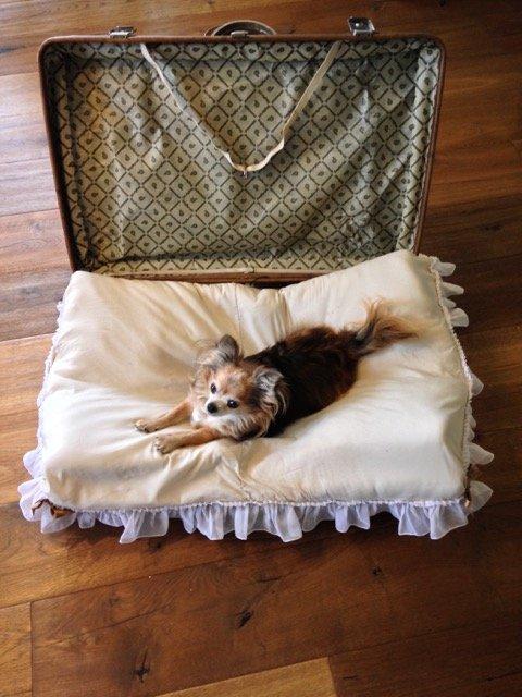 Hundebett hundebett selber machen - Koffer - hundebett selber bauen
