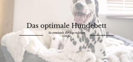 Hundebett richtige Größe