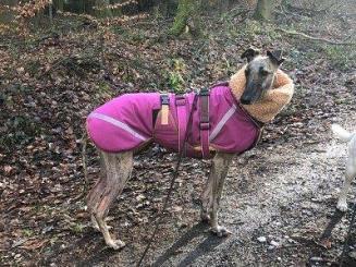 Mantel mit Brustgeschirr
