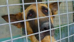 Hundehölle Apulien: das System «canile»