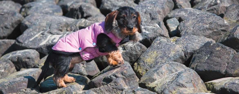 Hundebekleidung - Schnickschnack oder Notwendigkeit?