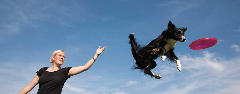 Hundefrisbee – ein Sport für Körper und Köpfchen
