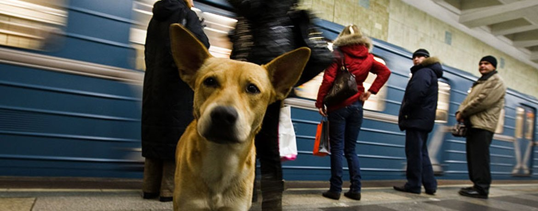 Metrohunde