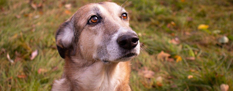 Sozialer Stress beim Hund