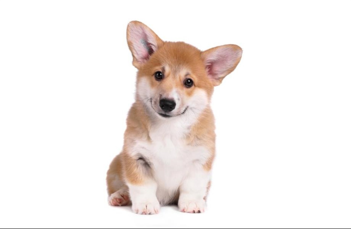 Bliv Klar Til Hvalp Hunden Dk