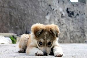 kjendisene sine hundenavn