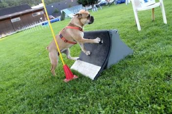 Flyball2