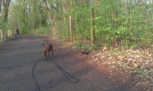 Hund mit Laufleine