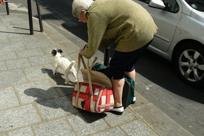 Arthrose ist bei Hunden eine erstnzunehmende Krankheit
