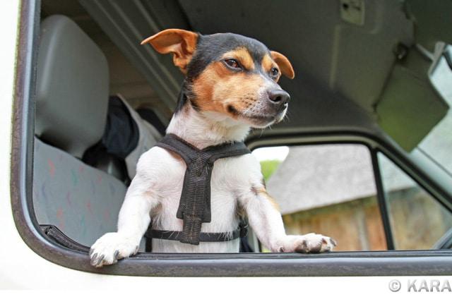 Brustgeschirr Hund