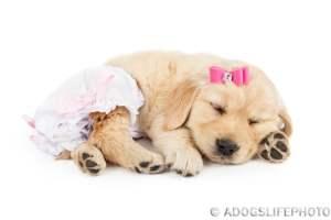 Windeln für Hunde