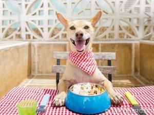 Wieviel Nassfutter Hund pro Tag