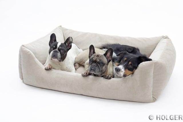 Listenhunde Berlin im Hundekorb
