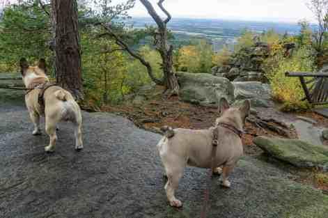 Mandelstein Hundereise