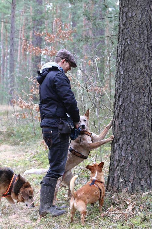 dogwalker-ausbildung-abschluss-2016-leckerliebaum-leckerliesuche-suche-suchaufgabe-hundegruppe