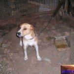 , illegale Haltung von Kerttenhunden