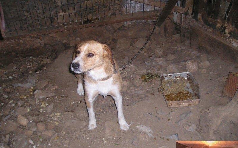 Tierschutz-Report Kreta