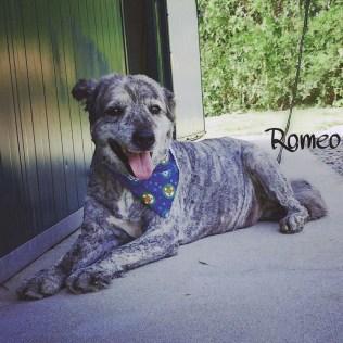 Romeo frissad