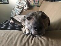Daisy soffa