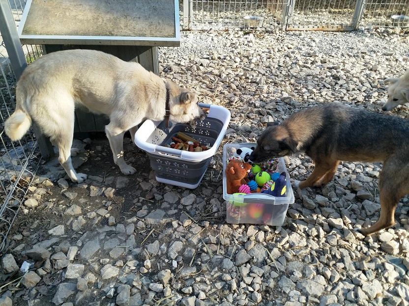Tre hundar doda av forgiftat godis 3