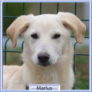 Marius - hane- 2019 - 5800kr