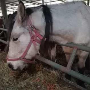 hästar12