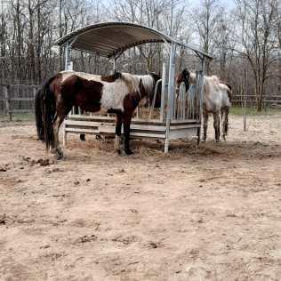 hästar16 (1)