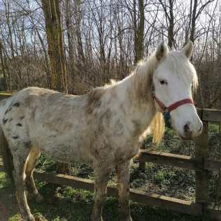 hästar16 (3)