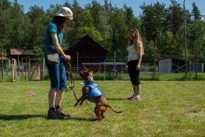 hundkurs hundutbildning