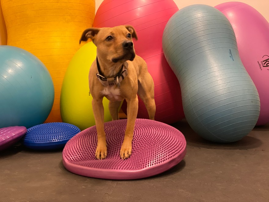 hundkurs balansboll hundutbildning