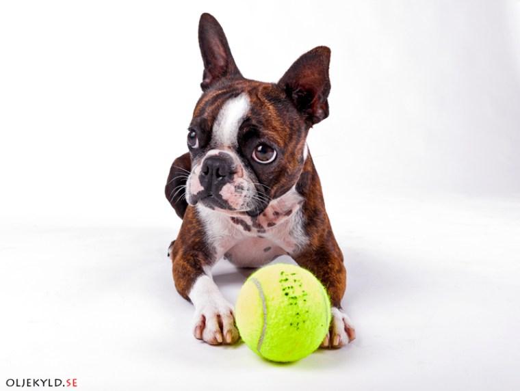 beteendeutredning hundutbildning hundkurs
