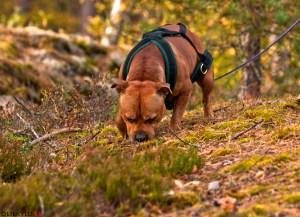 spårkurs personspår hundkurs hundutbildning