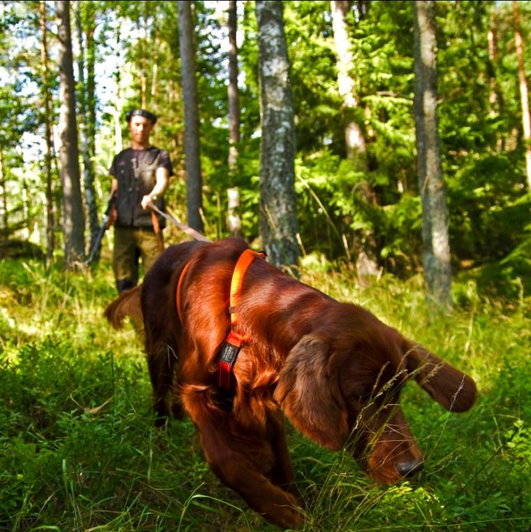 viltspårkurs hundutbildning hundkurs