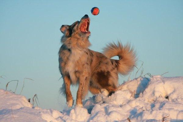 hundeleg-2