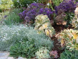 Planting a drought tolerant garden is one way each us can become a powerful force for sustainability