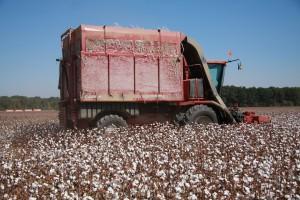 cotton picker