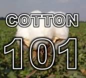 cotton-101