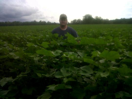 tallest cotton we have (needs to be pixed!!) Squared and flowering