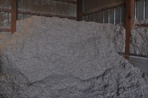 cottonseed in the barn
